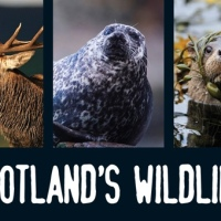 Scotland's 'Big Five'