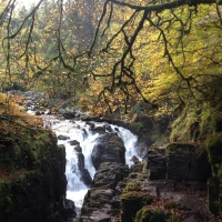 Autumnal Trees and Leaping Salmon at the Hermitage