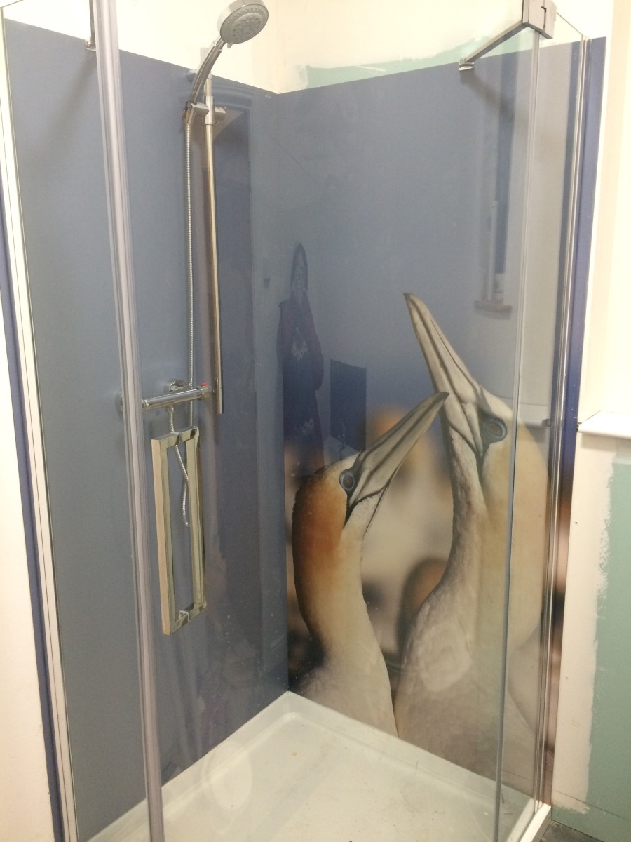 Gannets in the Shower
